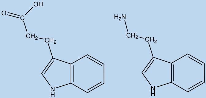 aacidmetabolites